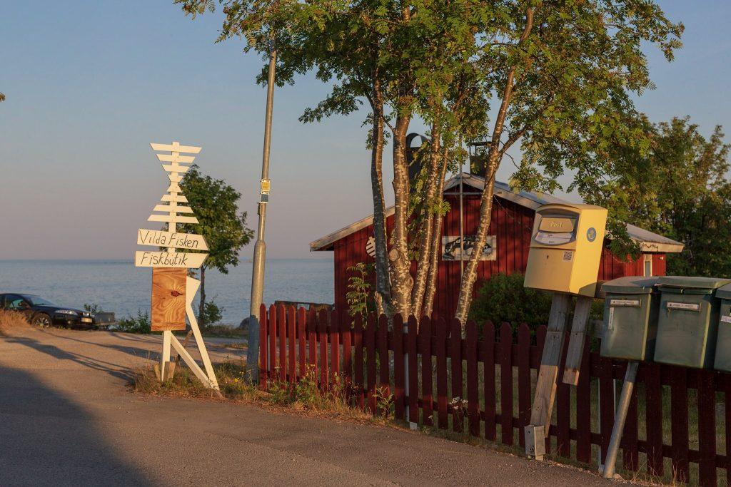 Vilda fisken yrkesfiskare i Nordanstig. Lax, sik, strömming